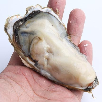 海鲜牡蛎 鲜活生蚝 5斤 送牡蛎刀 芥末油 手套 ¥29