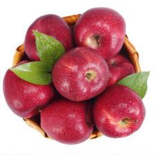 潘苹果 甘肃天水花牛苹果 12枚 约4斤 15元